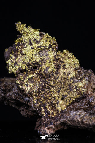 20471 - Top Beautiful Native Gold In Its Hydrothermal Quartz Matrix New Location Aouserd Occidental Sahara