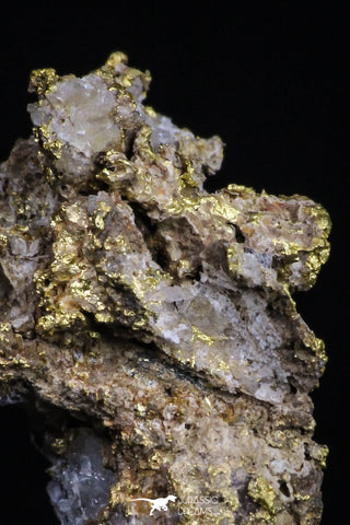 20476 - Top Beautiful Native Gold In Its Hydrothermal Quartz Matrix New Location Aouserd Occidental Sahara