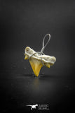 03189 - Premium Quality 0.59 Inch Cretolamna maroccana (mackerel shark) Tooth Necklace Pendant