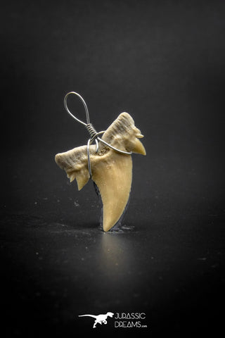 03190 - Premium Quality 0.82 Inch Cretolamna aschersoni (mackerel shark) Tooth Necklace Pendant