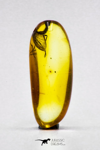 04281 - Collector Grade 0.56 Inch Baltic Amber With An Inclusion Of Fossil Insect (Diptera - Sciaridae Fly)