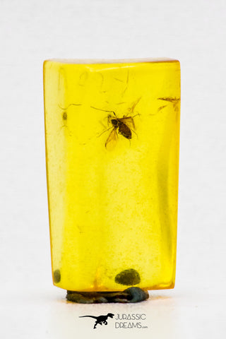 04282 - Well Preserved 0.35 Inch Baltic Amber With An Inclusion Of Fossil Insect (Diptera- Dolichopodidae Fly)