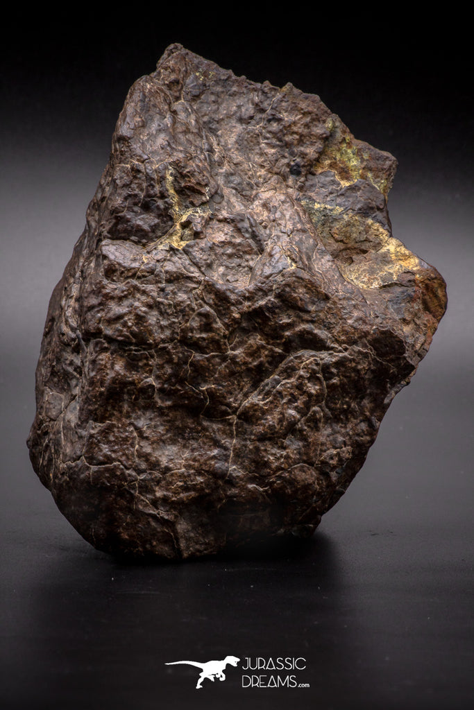 04538 - Unclassified NWA 1349 g Chondrite L-H Type Meteorite Sahara Fall