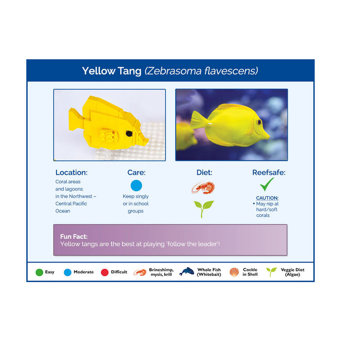 Yellow Tangs x 2