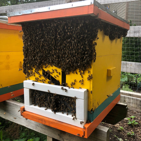 A Tough Spring for North Carolina Bees & No Killer Bees Honey in 2018