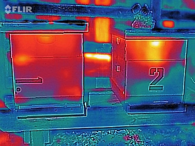 Thermal Thursdays: Neighboring Hives handle Winter Temperatures Differently
