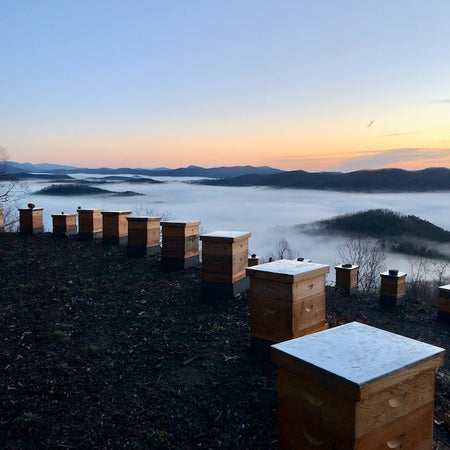 Surviving The Winter with Minimal Bee Losses in the Apiary