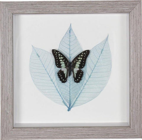 Wall Art - Framed Butterfly Exotic Black and Turquoise