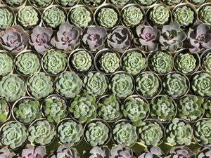 HOW TO CARE FOR SUCCULENT PLANTS