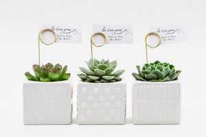 Succulents in a mix of square ceramic pots