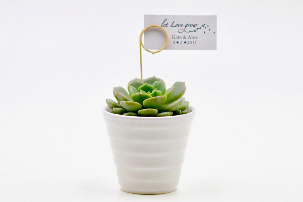 Succulent in Ceramic Cone Shaped Pot