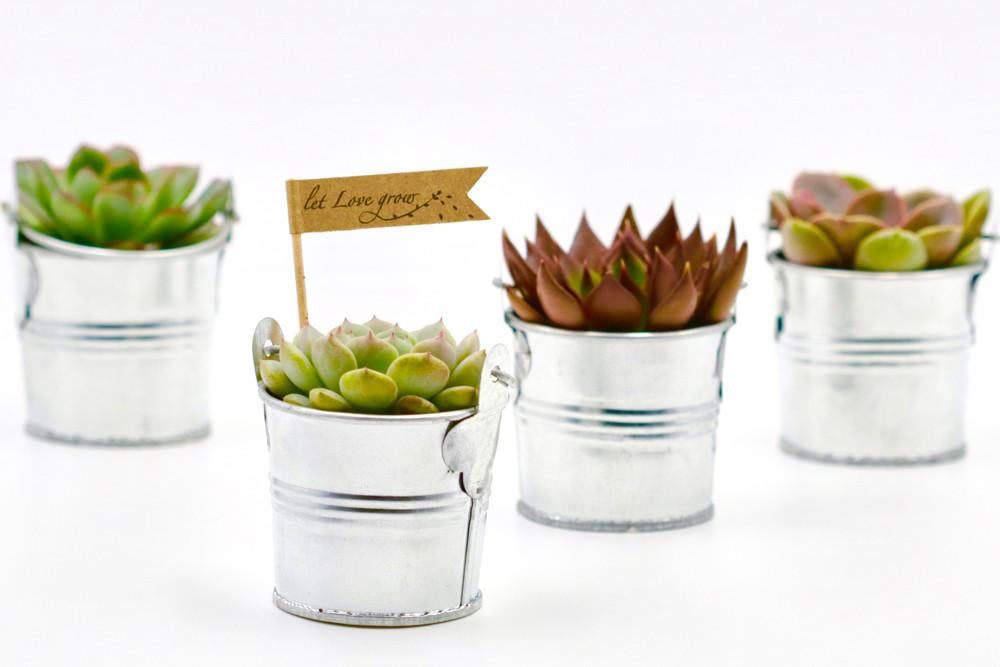 Succulent in Tin Bucket - Silver