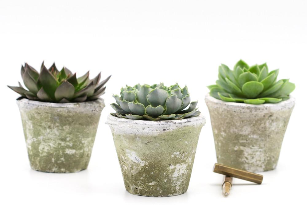 Medium succulent in rustic whitestone pot