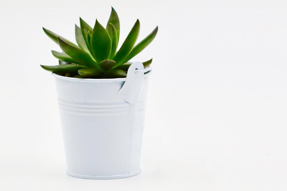 Succulent in Tin Bucket - White