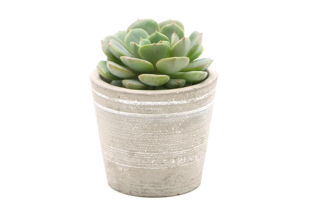 Small concrete pot