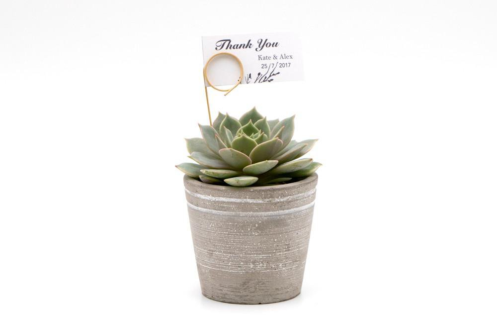 Succulent in Concrete Pot - Small