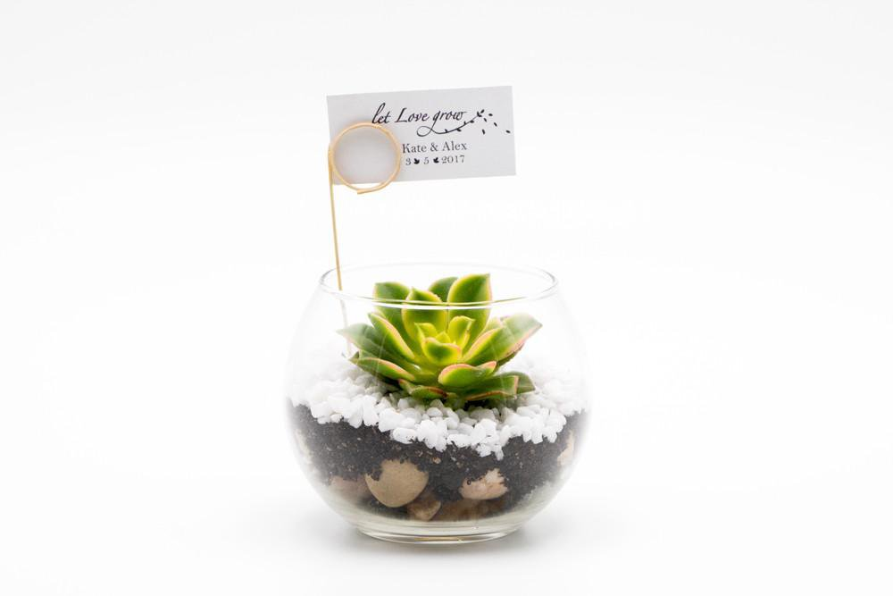 Succulent Terrarium Kit 3 – Fish Bowl Glass Terrarium