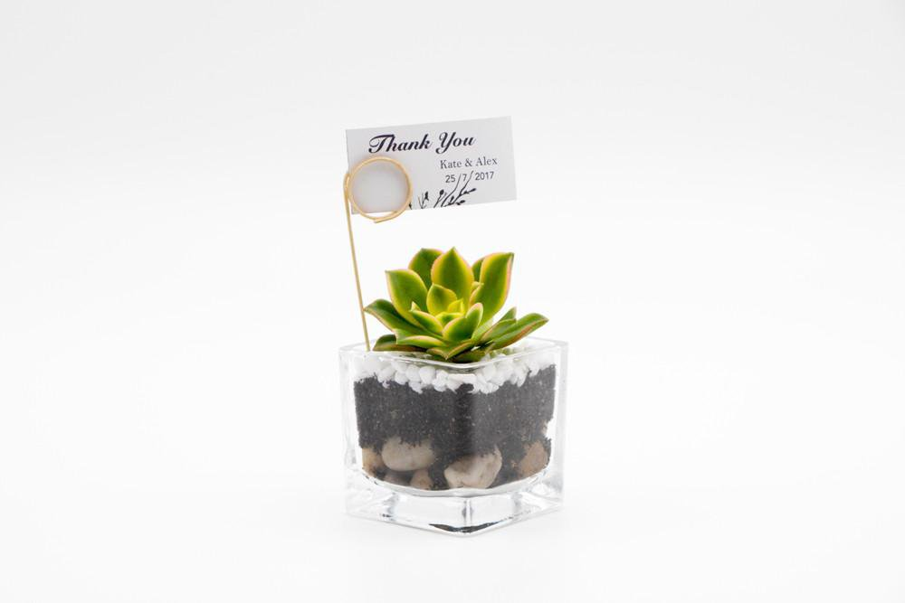Succulent terrarium kit 1-  square glass