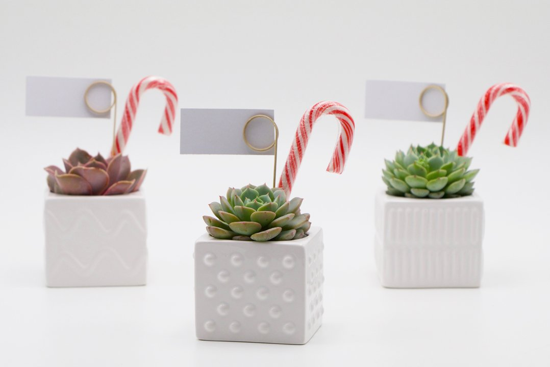 Succulent Christmas Gift in a mix of square ceramic pots
