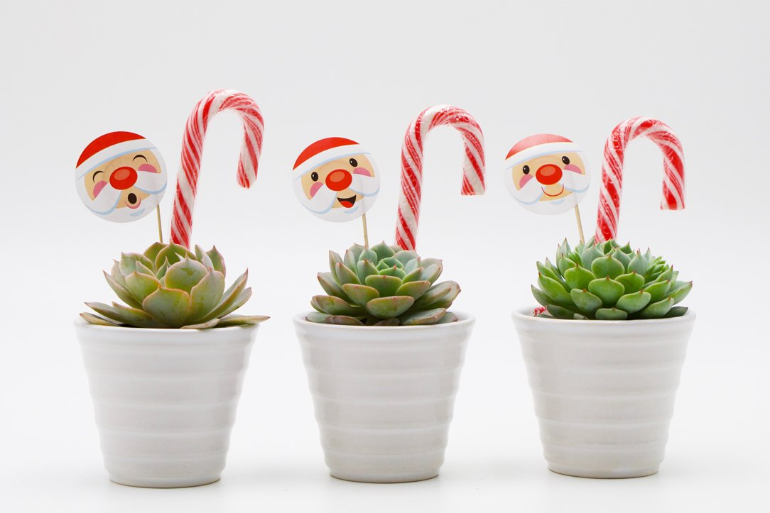 Succulent Christmas Gift in Ceramic Cone Shaped Pot