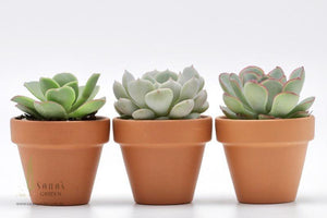 DIY Succulent Terracotta Pot