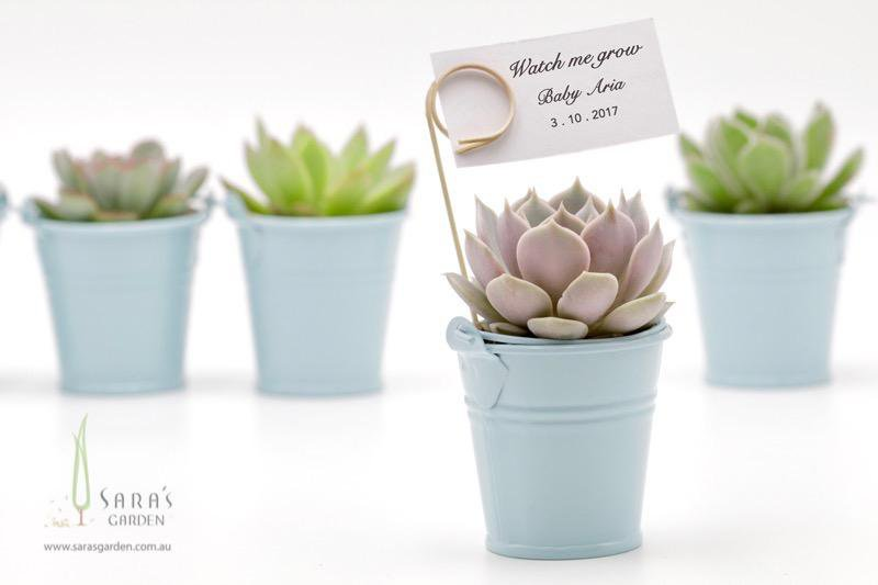 Succulent in Tin Bucket - Blue