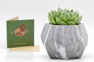 Succulent in Canyon Concrete Pot
