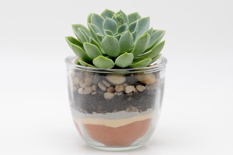 Succulent in Round Glass Pot