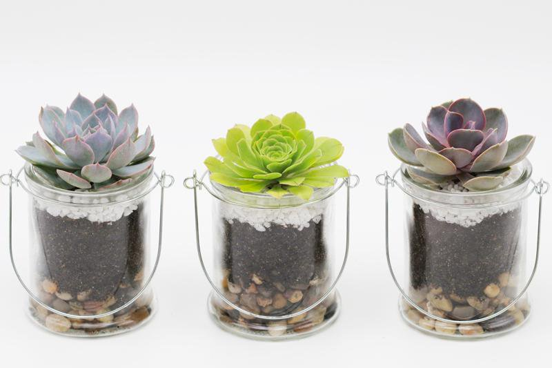 Succulent terrarium with handle - A set of 3