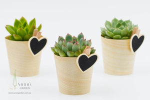 Mini Potted Succulent - Gift Wrapped