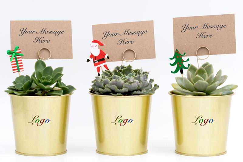 Succulent Christmas Gift in a Gold Pot - 9cm