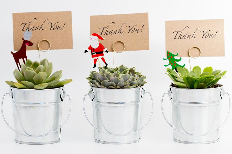 Succulent Christmas Gift in a Silver Pot - 9cm