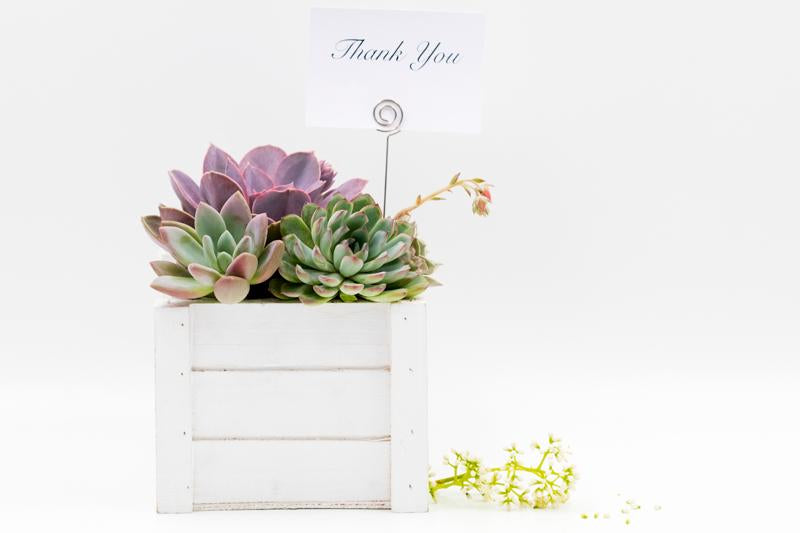Succulent gift in wooden box