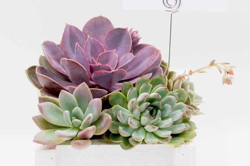Succulent arrangement in wooden planter
