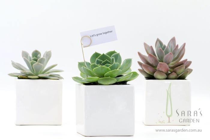 Square Ceramic Potted Succulent 10CM