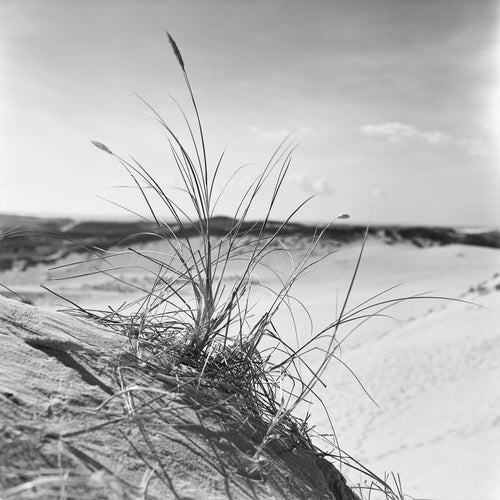 Strandimpression II - Sylt 1955