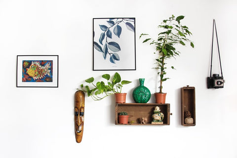 Paintings on wall with shelf and plants
