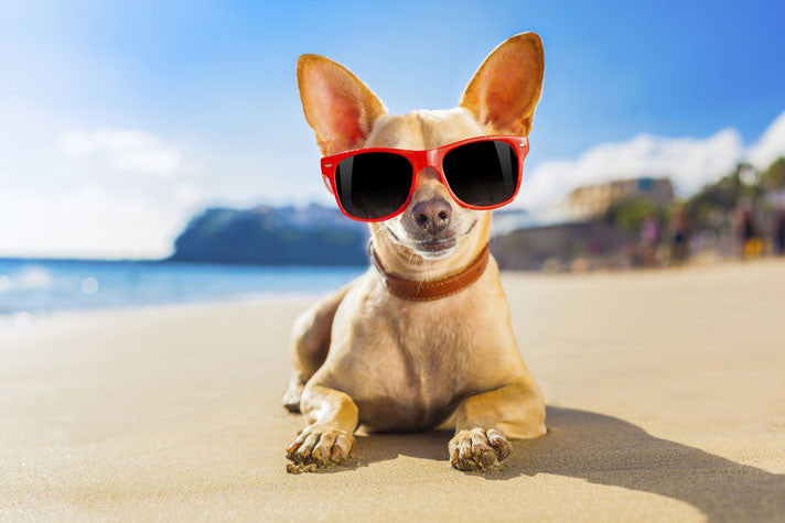 Help your doggy pal enjoy the summer too …