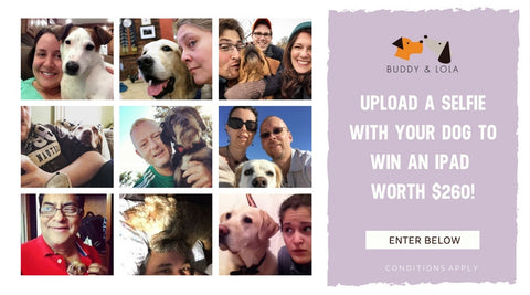 DOG SELFIE PHOTO COMPETITION USA WIN AN IPAD