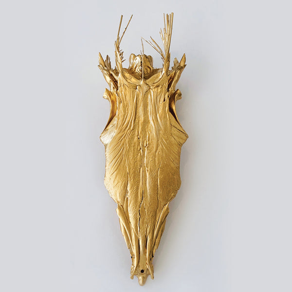 Gold Barracuda Skull