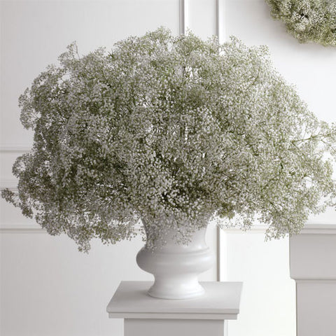Baby's Breath Urn Arrangement