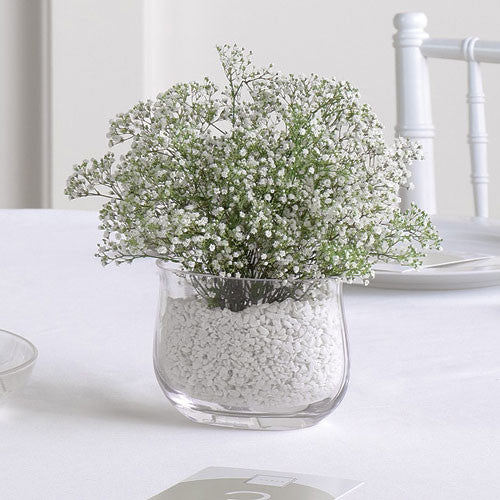 Baby's Breath Vase Arrangement