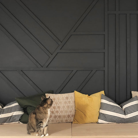Cat Looking At Accent Wall
