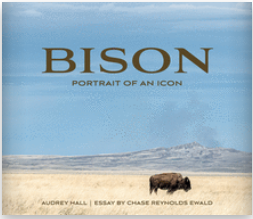 Bison: Portrait of an Icon