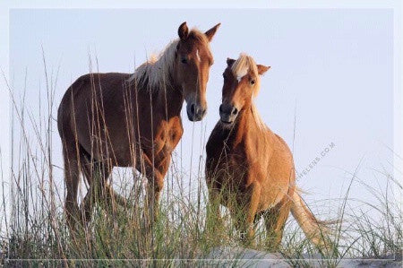 "Fine Art Print by In The Lens: ""Wild Mustang Pair on the Beach"""