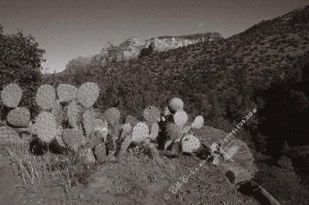 In The Lens Photography: Prickly Pear Cactus, Sedona, AZ, Color