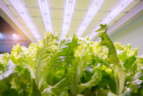 The Indoor Sun: How To Use Sunlamps For Hydroponic Gardening hydroponic garden under lights