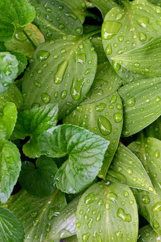 What Kind Of Ventilation Does Your Indoor Garden Need? wet leaves