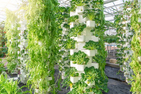 What Is Hydroponic Gardening? vertical hydroponic gardening