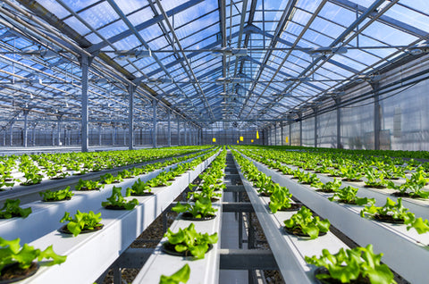 What Is Hydroponic Gardening? Hydroponic garden cultivation farm